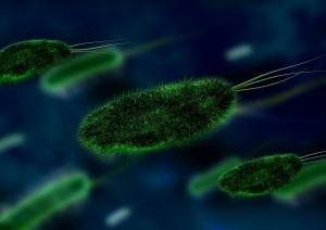 bacteria-106583_1920